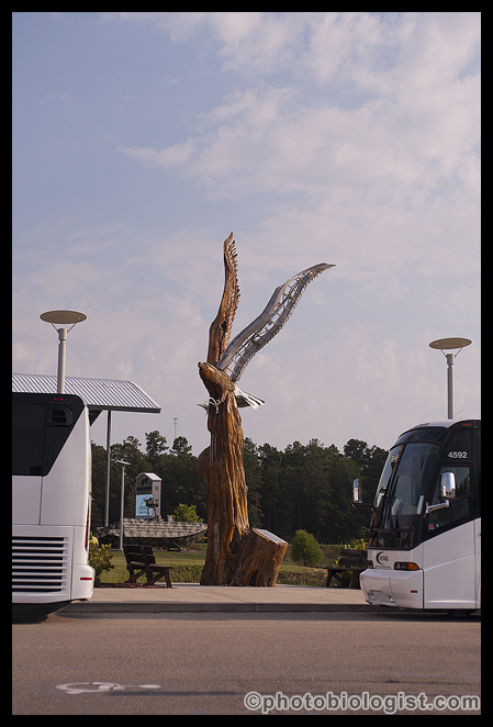 Marlin Miller's eagle sculpture framed by two tour buses.