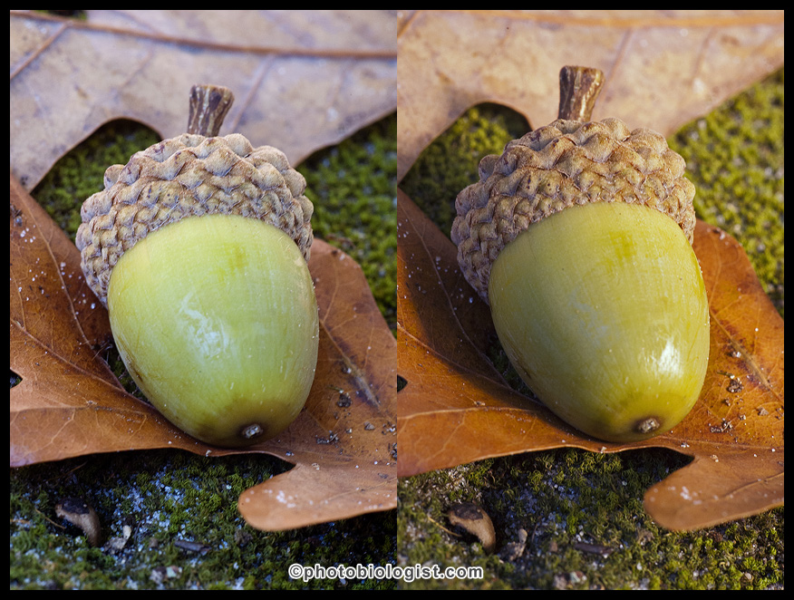 White Oak Acorn  Existing Light on Right Gold Reflector on Left