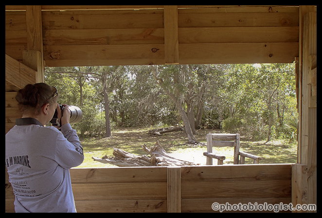 Shooting out of one of the bird blinds at Indian Point RV Resort in Gautier, MS.